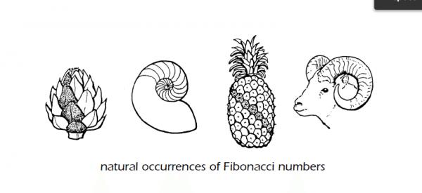 tan-man-ve-fibonacci-va-ti-le-vang-traderviet-2.