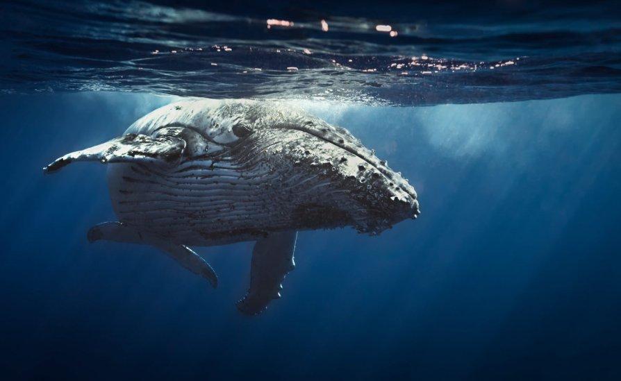 whale-btc.